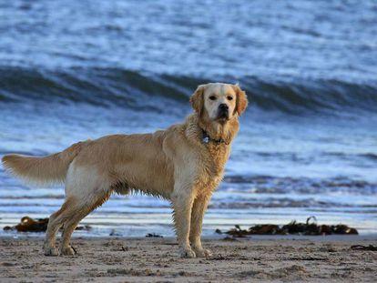 Por qué es una salvajada cortar la cola a los perros