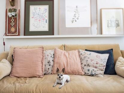 Pippa, perra influencer, en el salón de su casa, en Aravaca (Madrid).
