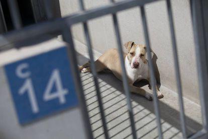 Un perro en el Centro de Protección Animal de Madrid en la Fortuna, Leganés.