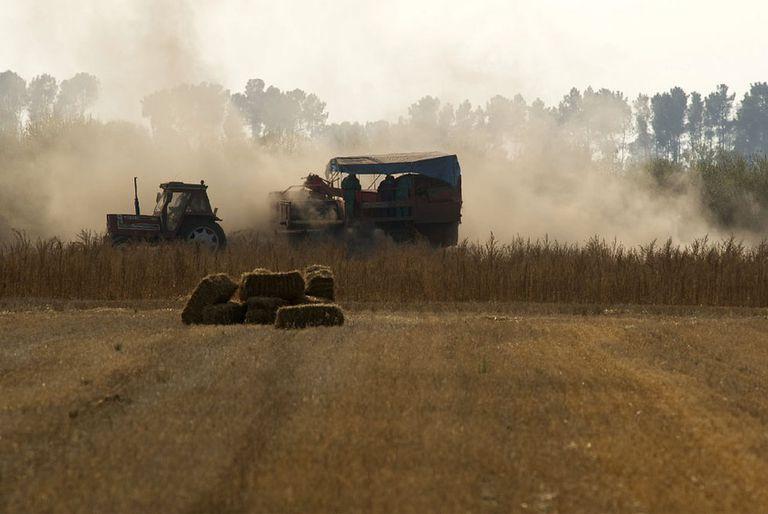 Agricultores trabajando en la recogida de la cosecha de patatas en la comarca ourensana de La Limia.