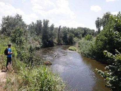El río Jarama a su paso por Rivas-Vaciamadrid, donde prolifera la mosca negra.