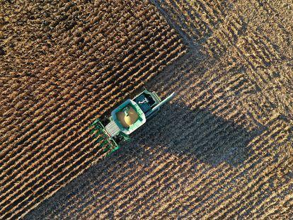 Un tractor trabaja en la cosecha de maíz en Indiana (EE UU), en octubre de 2020.