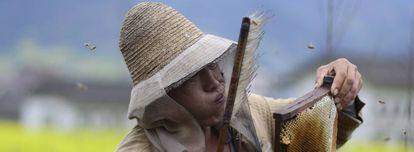 Un apicultor chino sopla a un panal en la provincia de Sichuán.