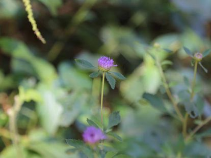 Flores en el bosque atlántico del Alto Paraná.