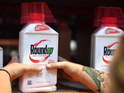 Un empleado coloca un envase de Roundup en el estante de una tienda en San Rafael, California. En vídeo, declaraciones de los demandantes y su abogado.