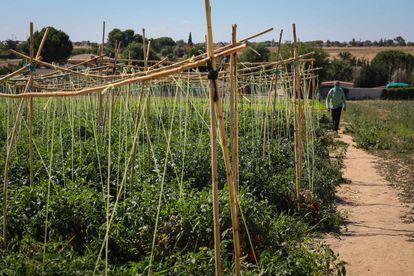 Terrenos de cultivo de la empresa frutas Azahara en Griñón (Comunidad de Madrid).
