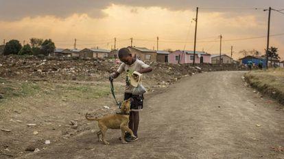 Los perros pueden ser claves para luchar contra los virus en África.