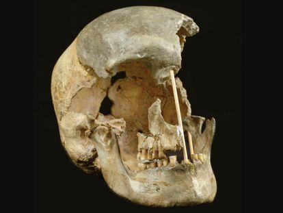 El cráneo de una mujer que vivió hace unos 45.000 años en República Checa, uno de los restos analizados.