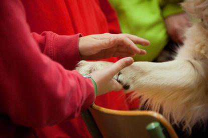 Un perro enseña la importancia de la empatía y el cariño a un alumno.