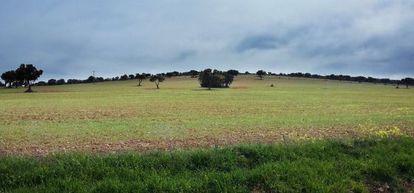 Campo entre Torrenueva y Torre de Juan Abad (Ciudad Real) donde Quantum investiga tierras raras.