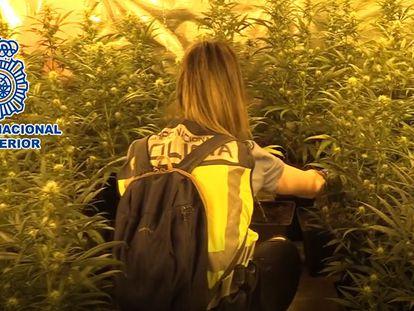 Imagen de la intervención en Usera, donde los agentes desmantelaron tres narcopisos y nueve plantaciones de marihuana