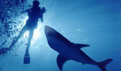 Australia registra unos 15 ataques de tiburón al año.