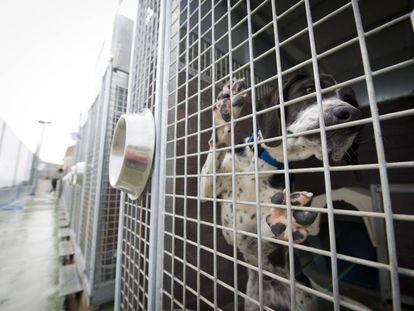 Un perro, dentro de un centro de acogida de animales. Imagen de archivo.