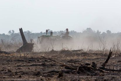 Un tractor limpia las tierras quemadas para poder cultivarlas.