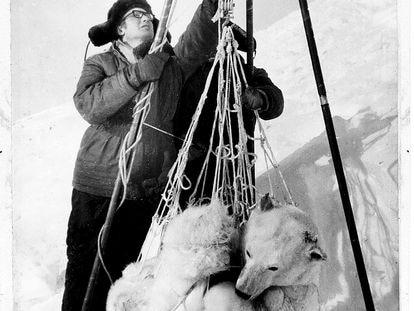 Stas Biélikov, compañero de expedición de Shentalinski, pesa una osa en una foto del libro 'Mi amor, la osa blanca'.