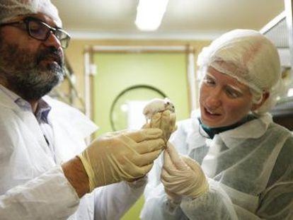 La revolucionaria técnica CRISPR ha permitido al investigador Lluís Montoliu reproducir en un animal la condición genética de esta actriz con albinismo