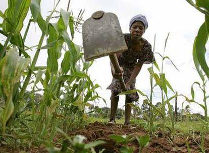 El que fuera el granero de África tiene hoy un crecimiento negativo en el apartado agrícola.