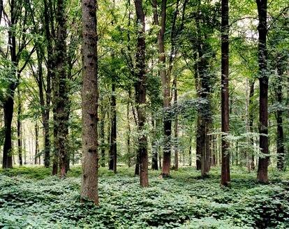 Bosque en el que tuvo lugar la batalla del Somme (Francia) en 1916, retratado en 2002 por Tomoko Yoneda.