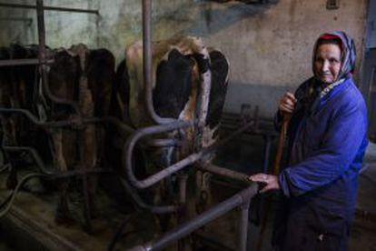 Una mujer trabaja en la explotación de 100 vacas de José Vence.