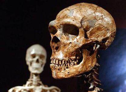 Un cráneo de neandertal (derecha), con otro de humano actual.