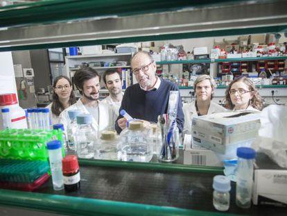 Ernest Giralt con parte de su equipo en su laboratorio del Institut de Recerca Biomedica de Barcelona (IRB).