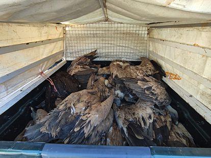 Varios de los ejemplares muertos en el envenamiento masivo.
