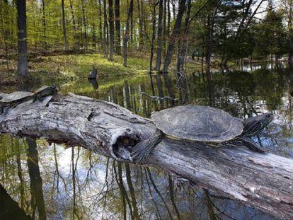 tortugas fuera del agua captadas durante el estudio en Canadá.