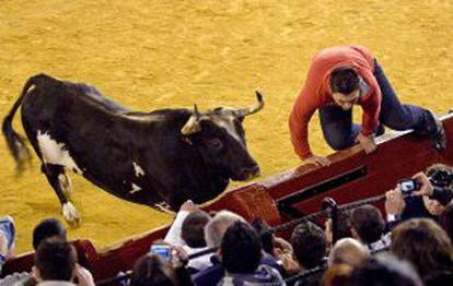 Fotografía de archivo facilitada por el diario Las Provincias del toro Ratón.