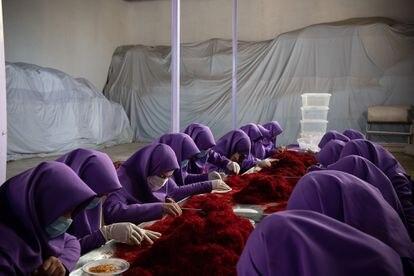 Un grupo de mujeres trabajan el azafrán en Herat (diciembre de 2018).