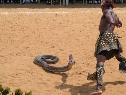 Ceremonia africana con una pitón.
