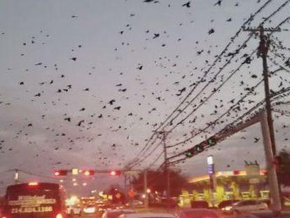 Se trata de un fenómeno que ocurre en los meses de enero y febrero con motivo del fin del invierno