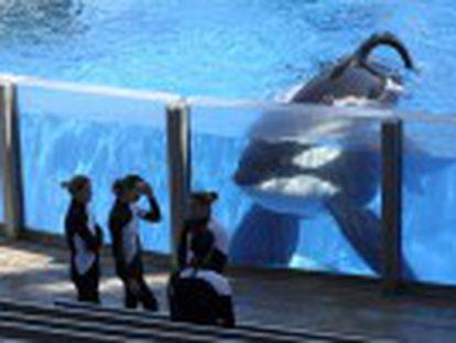 La compañía estadounidense cambiará también sus espectáculos con estos mamíferos