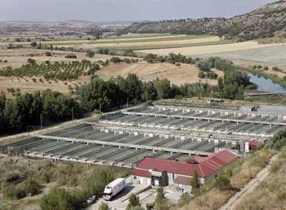 Vista de la piscifactoría en la que murieron cuatro personas dentro de una fosa séptica.
