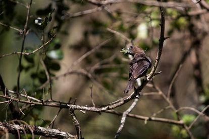 Un pájaro en el bosque de Karura.