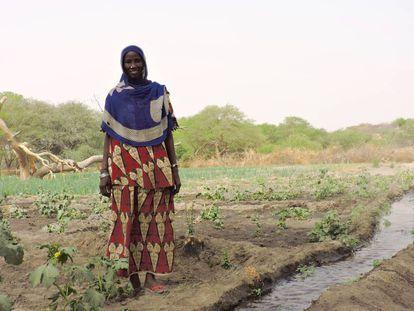Hadje Gombo, junto a su sistema de regadío en el Lago Chad (Chad).