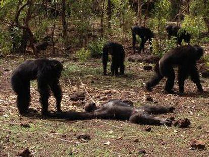 Un grupo asesina al líder derrocado tras regresar del exilio y canibaliza su cadáver