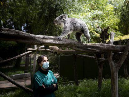 Eva Martínez, veterinaria del recinto, ante uno de los koalas del zoo de Madrid, durante el estado de alarma.