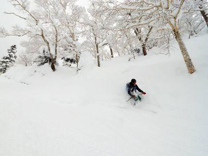 Asahidake, el paraíso de la nieve en polvo.