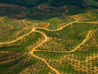 Vista aérea de una plantación de aceite de palma en una zona deforestada de Sabah, Borneo, Malasia, en 2007.