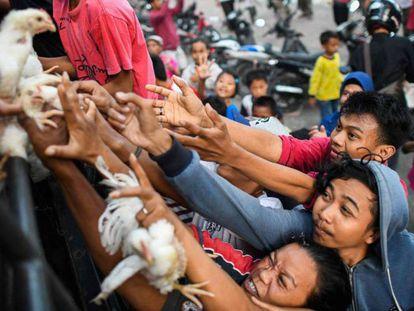 Supervivientes de la catástrofe tratan de hacerse con un pollo, este martes en Palu.