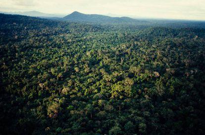 Cachito del Amazonas