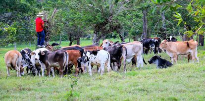 Productor agropecuario de la Orinoquia, Colombia.