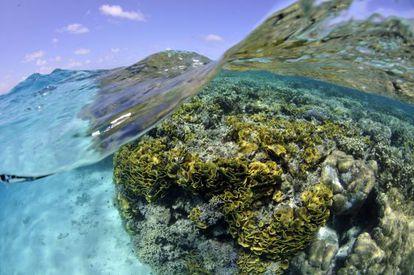 El 33% de los corales formadores de arrecifes están amenazados.