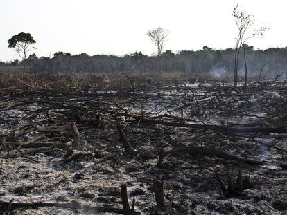 Una zona boscosa deforestada de Yucatán.