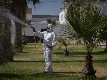 Un operario fumiga jardines en la localidad sevillana de Los Palacios.