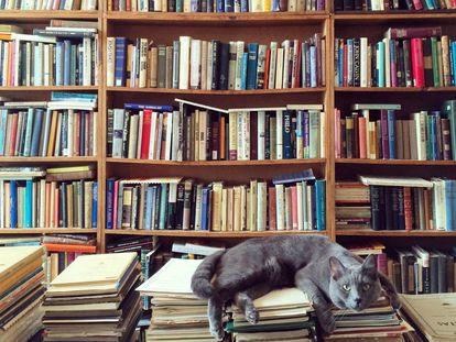Cinco libros sobre gatos a los que no me pude resistir