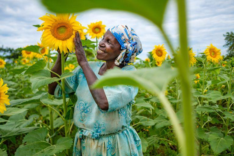 Ketty Okello, de 64 años, cultiva su campo de girasoles, una de sus principales fuentes de ingresos. Uganda, septiembre 2020.