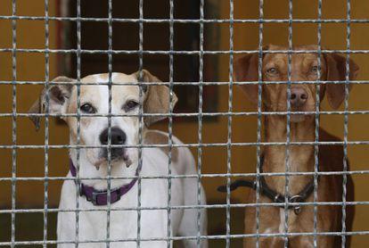 Perros acogidos en una protectora.
