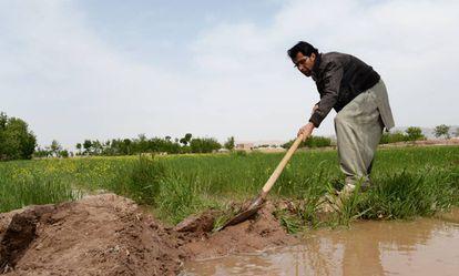 Un agricultor afgano trabaja en un campo irrigado recientemente.