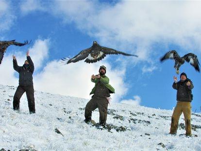 Las águilas reales más jóvenes regresan antes a sus nidos en el Ártico que las veteranas